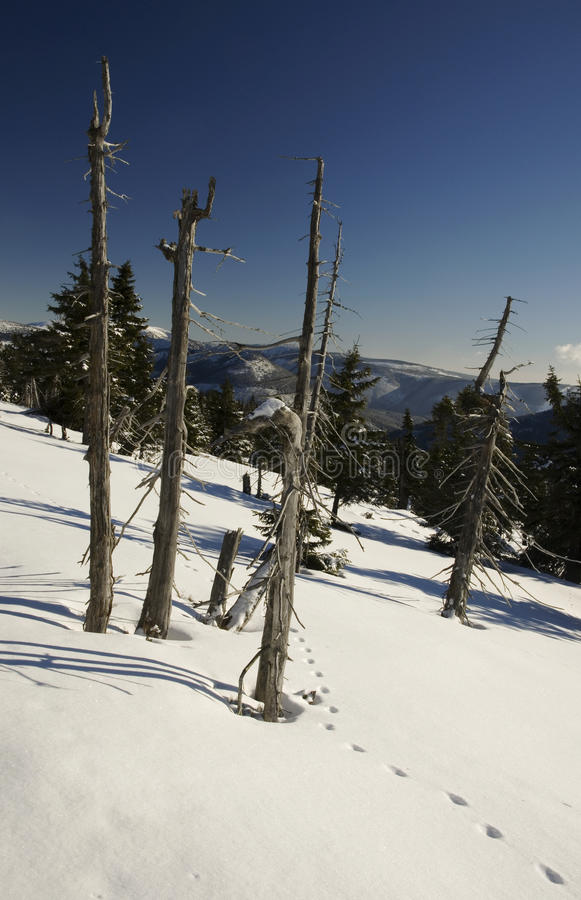 Trees in winter mountains stock photography