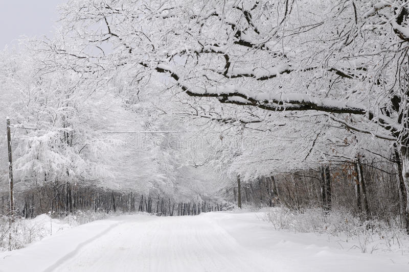 Trees in winter season royalty free stock images