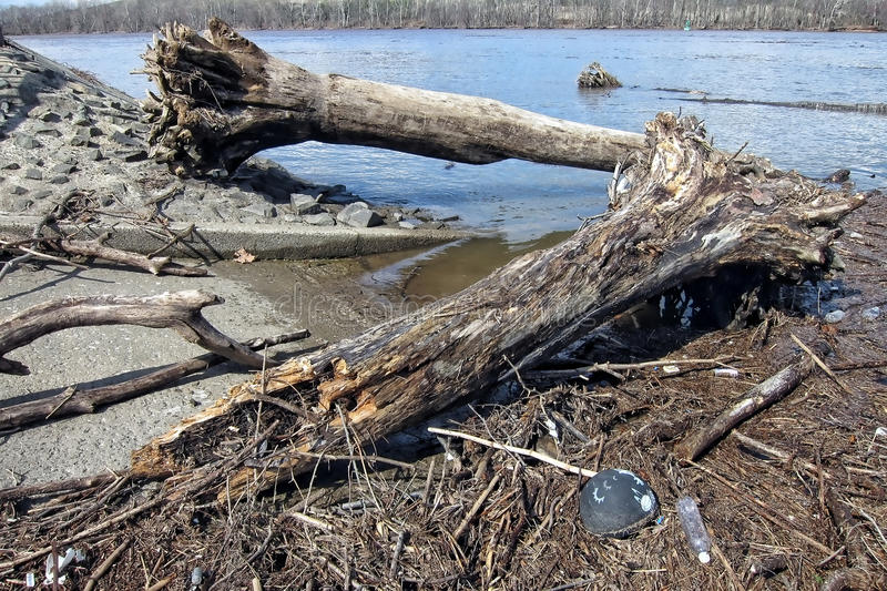 Trees and Wood Debris after Delaware River Flood royalty free stock image