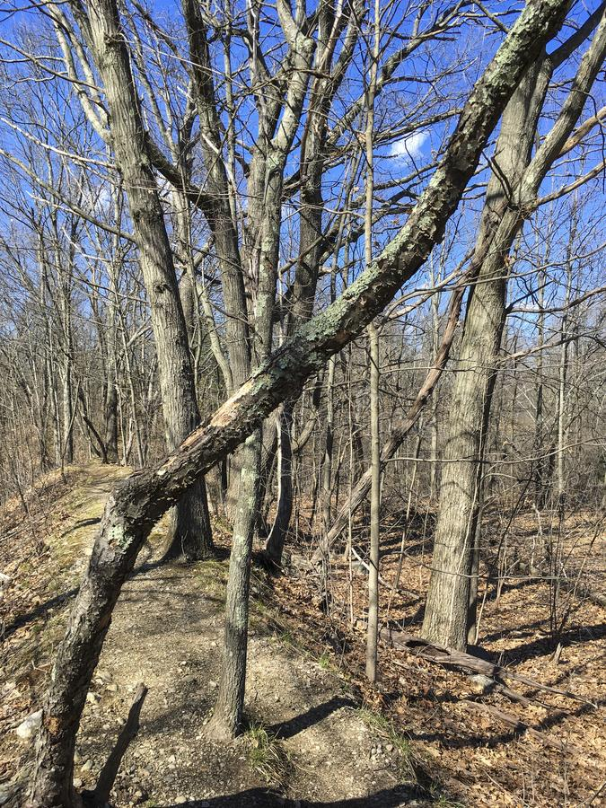 Trees in wooded area. In New England on a sunny day stock images
