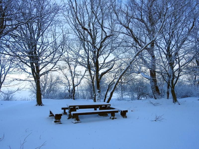 Trees and wooden bench near Curonian spit, Lithuania. Table and bench near Curonian spit and trees in winter royalty free stock images