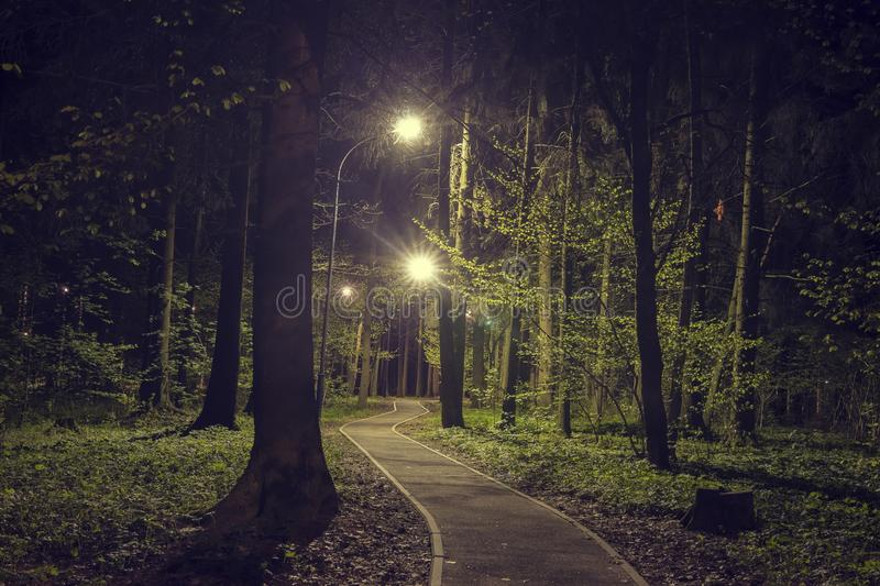 Trees in woodland park with lights at dark night. Landscape of night spring green park in city. Path in green forest stock photo