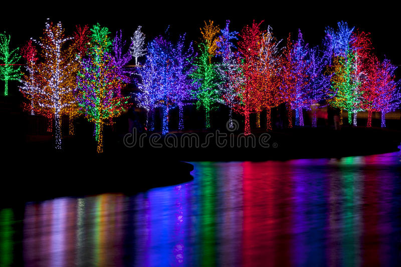 download trees wrapped in led lights for christmas stock photo image 48386551 - Light For Christmas