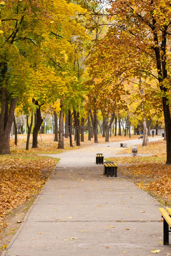 Trees with yellow and green leaves and footpath with benches stock image