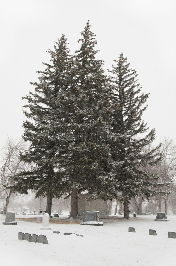 Free Trees3 Royalty Free Stock Photography - 51096857