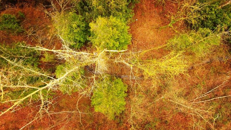 TreeScape image stock