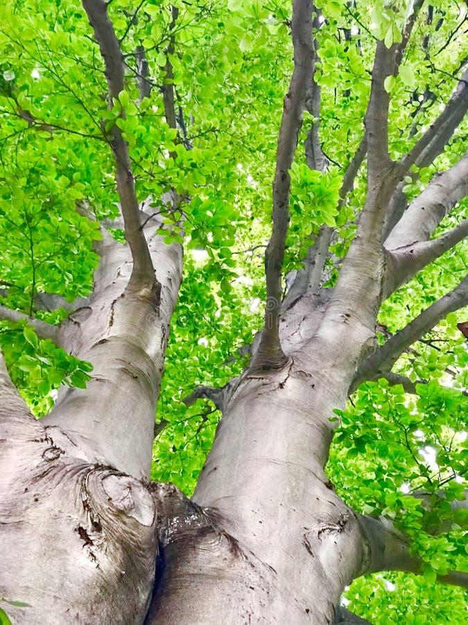 TreeScape image libre de droits