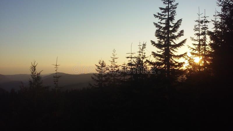 Treescape de Washington photos stock