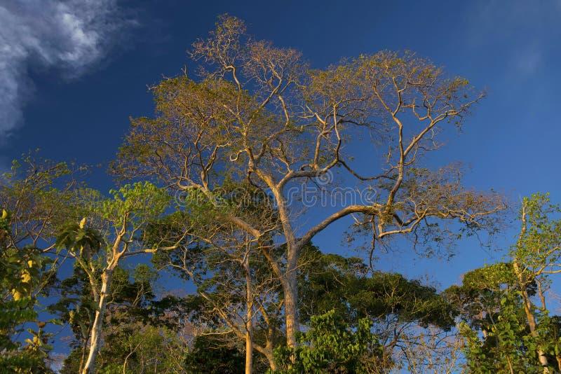 Treescape, tapu de Chidiya, Andaman images libres de droits