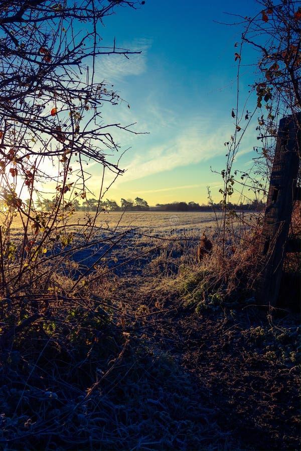 Treesfält och snow arkivbilder