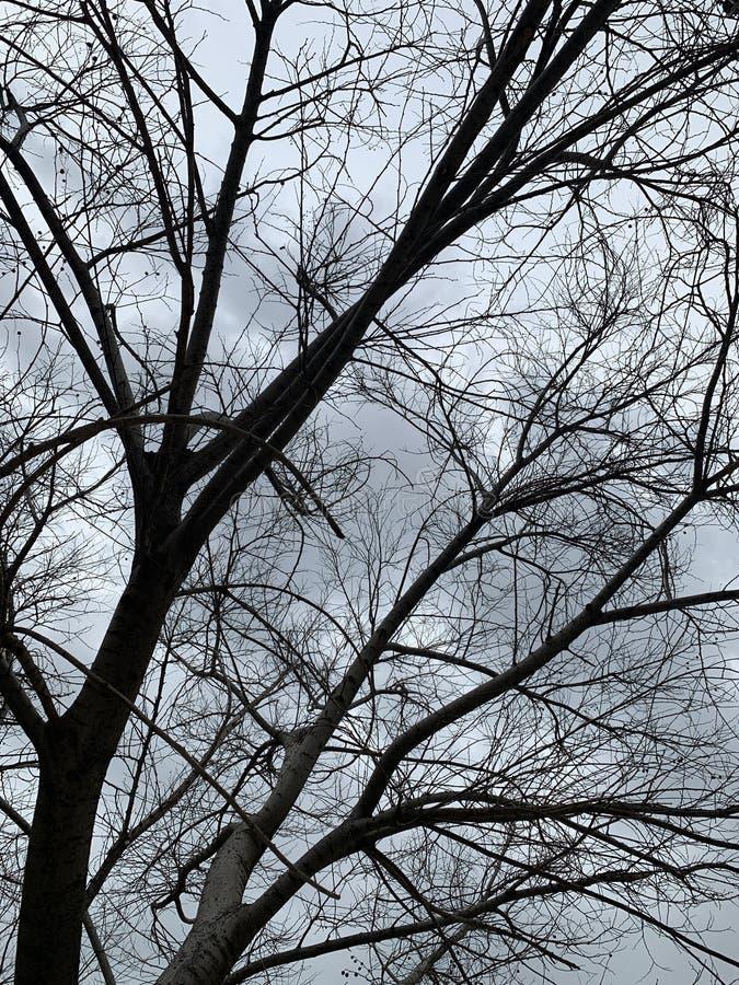 Treesf?lt och snow royaltyfria foton
