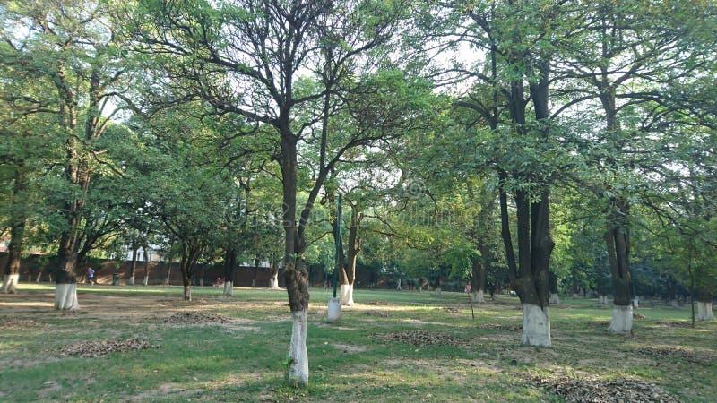 treespower στοκ εικόνα