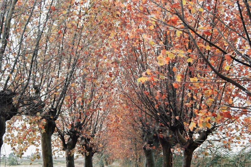 treestop en otoño imagen de archivo