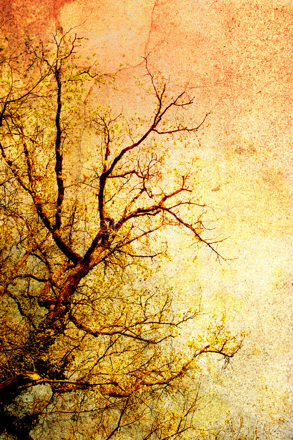 treetappning royaltyfri bild