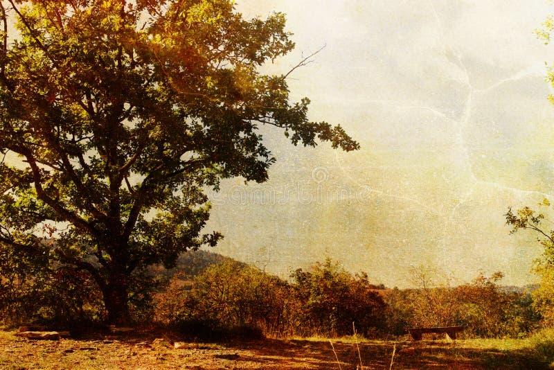treetappning arkivfoton