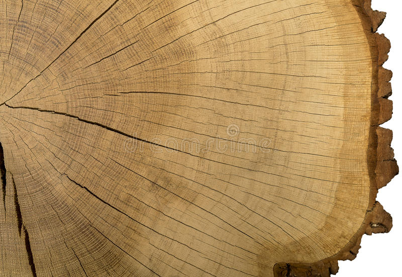 Treetboomstam stock foto's