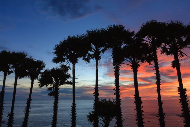 Treetop силуэта пальм во время захода солнца стоковое изображение rf
