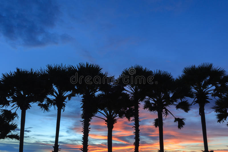 Treetop силуэта пальм во время захода солнца стоковые изображения rf