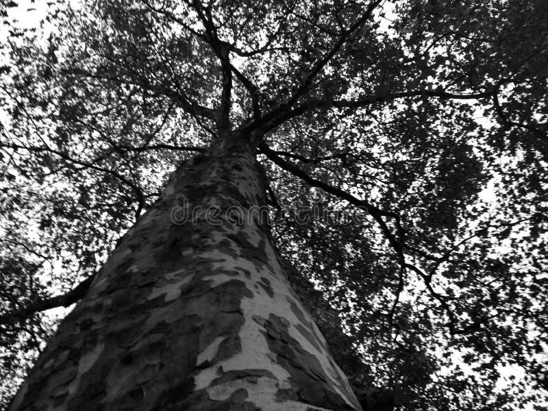 treetop stockbilder