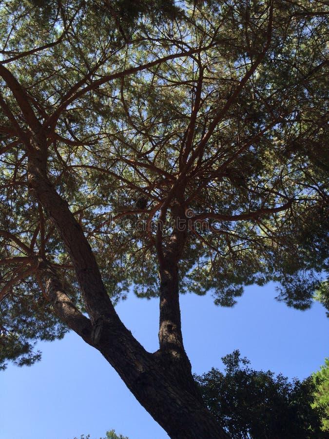 Treetop стоковое изображение rf
