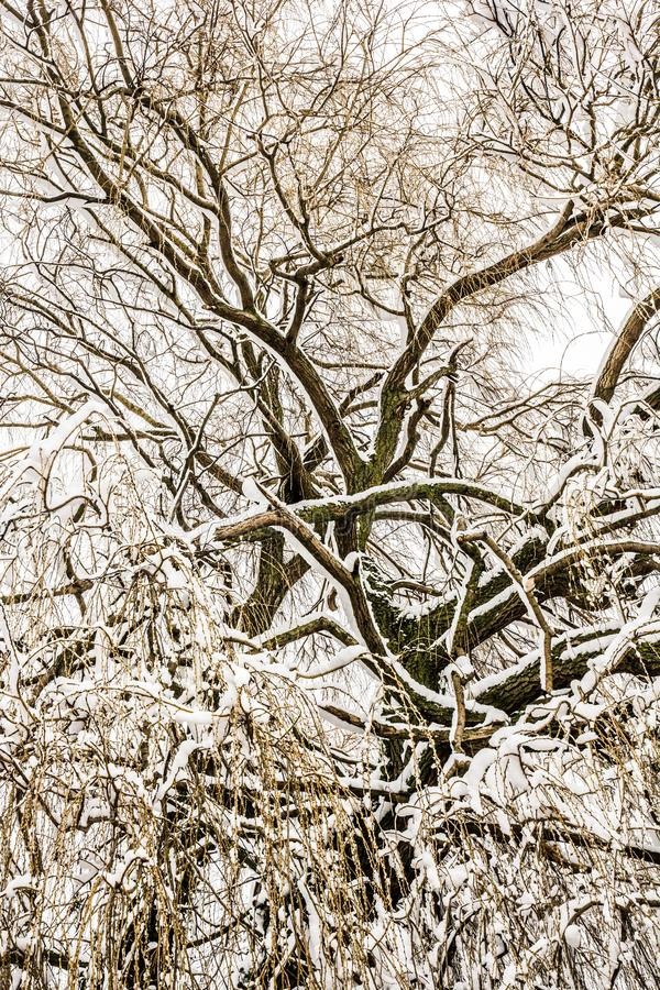 Treetop Abstact με τους παγωμένους κλάδους στοκ εικόνα με δικαίωμα ελεύθερης χρήσης