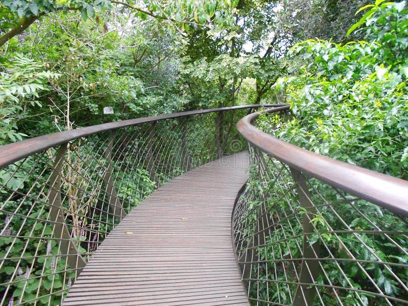 Treetop Bridge stock photo