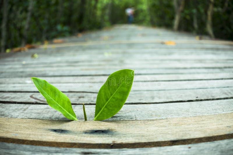Treetop het groeien op oud hout royalty-vrije stock foto