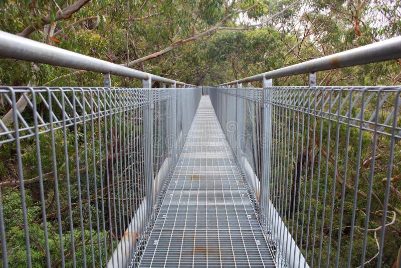 Treetop przejście w las tropikalny zdjęcie stock