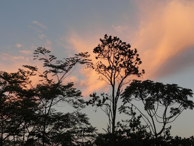 Treetop Sunset on the Big Island of Hawaii stock images
