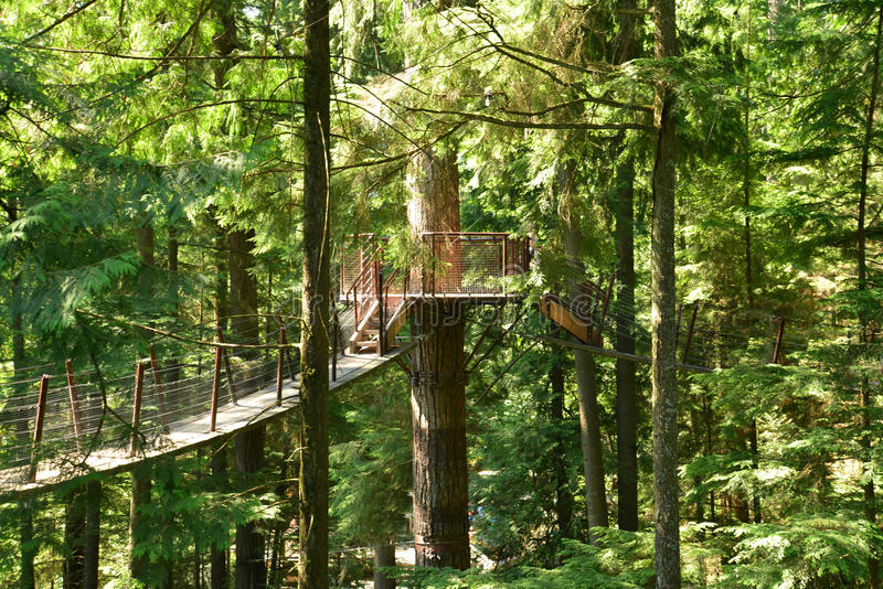 The treetop suspension bridges on Vancouver's North Shore. The Capilano Bridge on Vancouver's North Shore stands high above the Capilano River. It is a stock photo