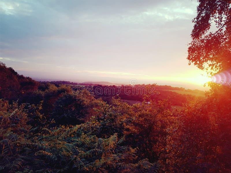 Treetop widok obrazy royalty free