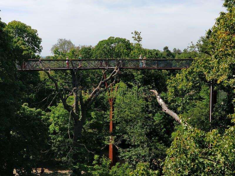 Treetopgångbana på Kew trädgårdar royaltyfria bilder