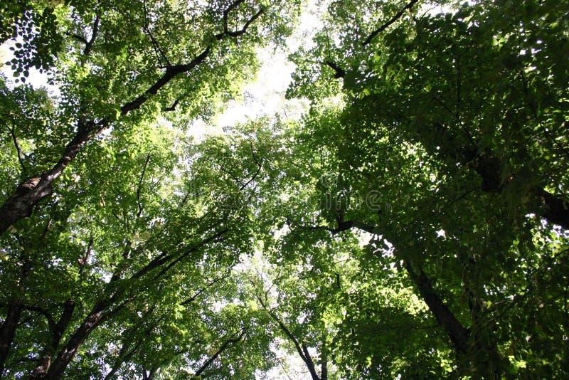 Treetops και ο ουρανός στο υπόβαθρο στοκ φωτογραφίες