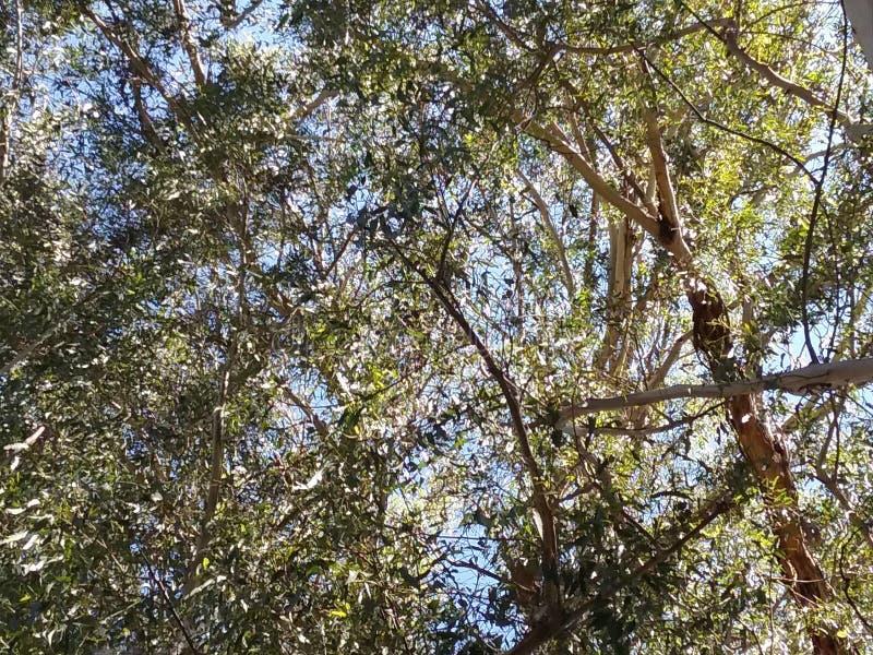 Treetops φύσης στοκ εικόνα με δικαίωμα ελεύθερης χρήσης