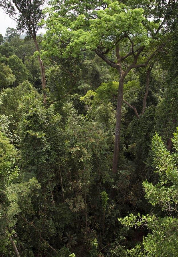 Treetops в тропическом лесе стоковое фото rf