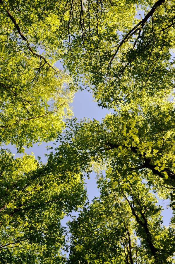 treetops fotografia stock