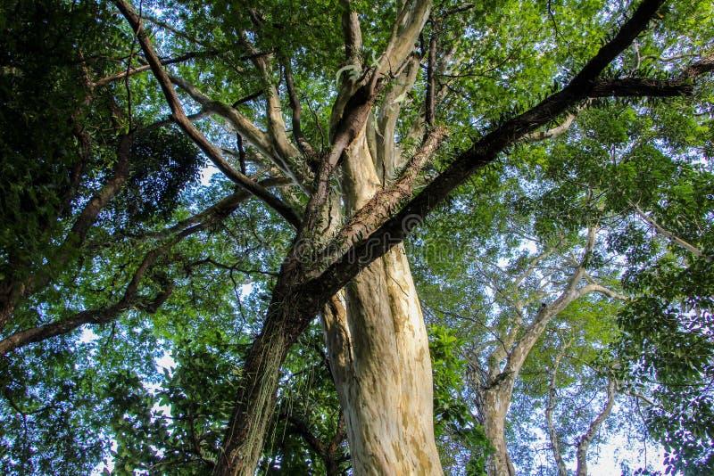 Treetops. Of a atlantic florest stock photos