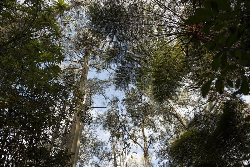 Treetops in bosaustralië royalty-vrije stock foto