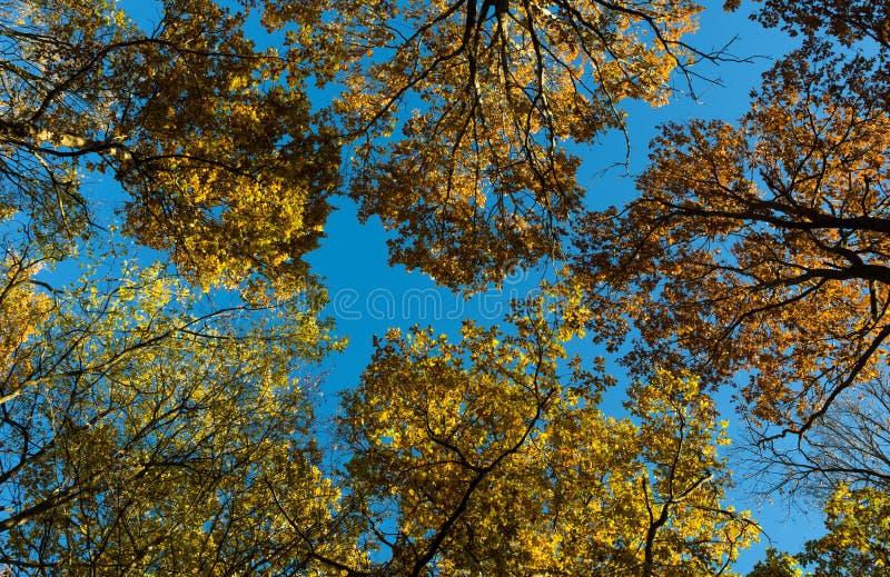 Treetops in de herfst royalty-vrije stock foto's