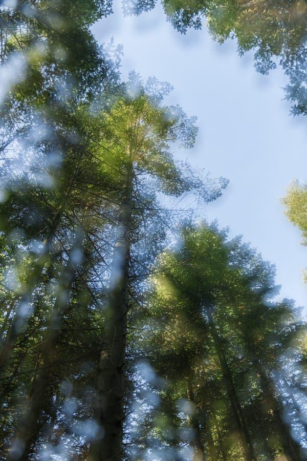 Treetops dubbel stelde zachte rand bloot stock foto's