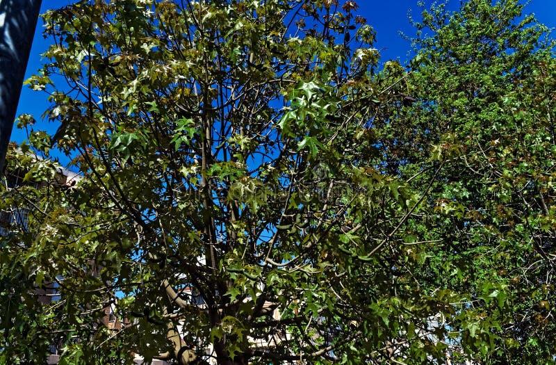 Treetops in een stad stock foto