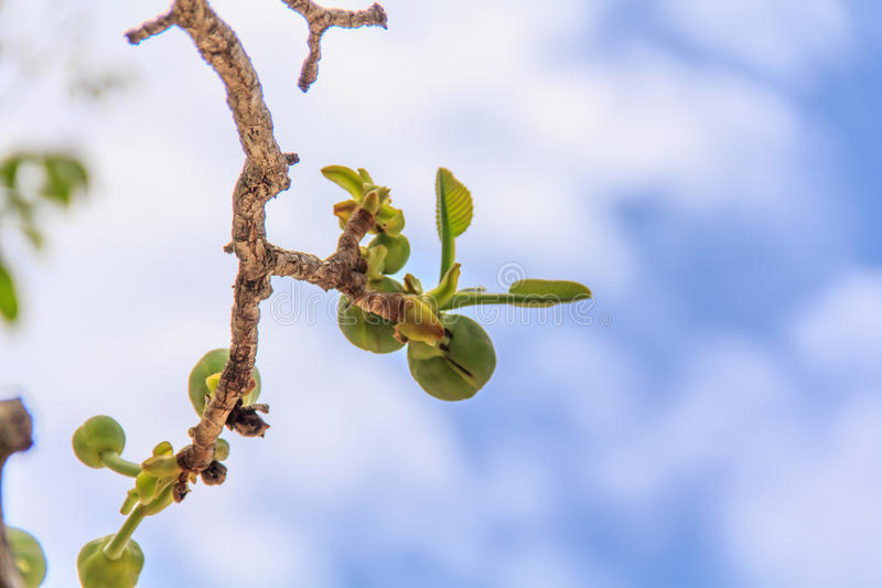 Treetops. stock photography