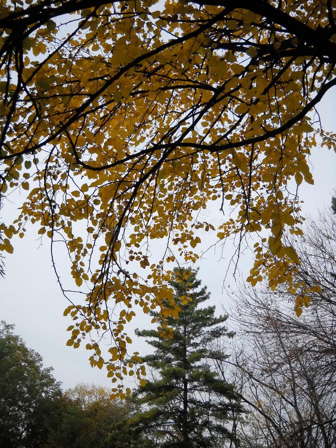 Treetops and rainy autumnal days. Leaves and tree tops, partly overlapping, in autumn and low light, in tones of orange, green, grey stock photo
