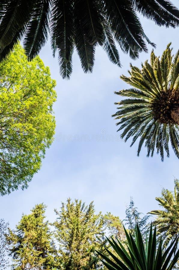 Treetops van verschillende bomen stock foto's