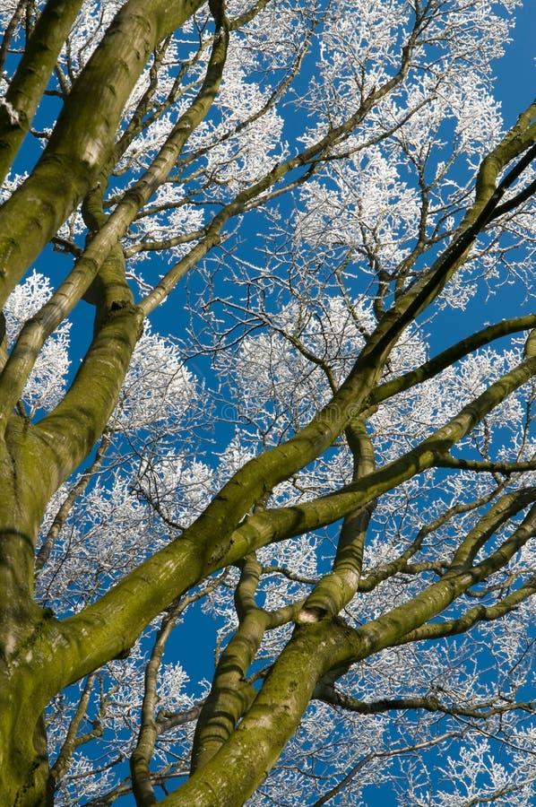 treetree de gelée photographie stock libre de droits