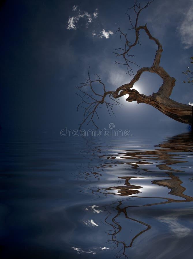 treevatten stock illustrationer