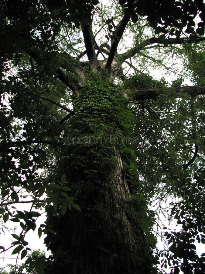 TreeVeg. stock photography