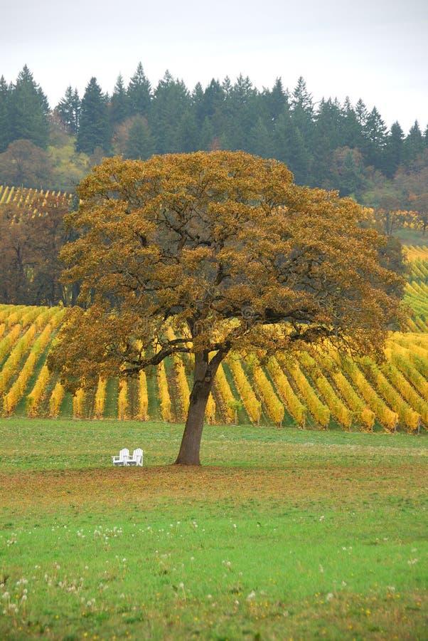 TreeVineyard стоковое изображение rf