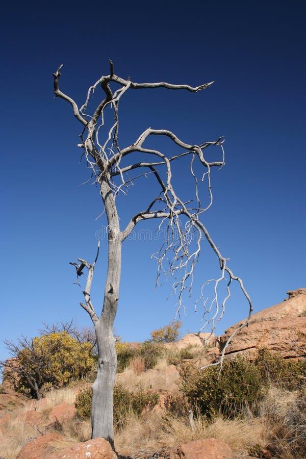 Treewhite Arkivbild