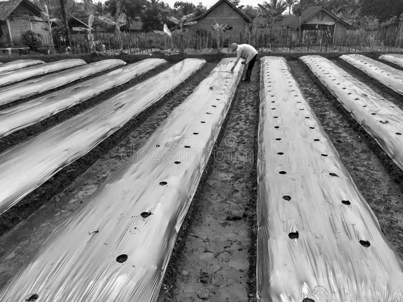 Tref voor het Spaanse pepergebied voorbereidingen stock afbeeldingen